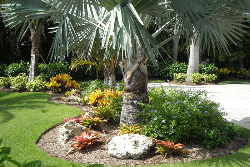 Landscaping service Murrells Inlet by Elite Coastal Landscaping LLC. Here is a nice palm tree.